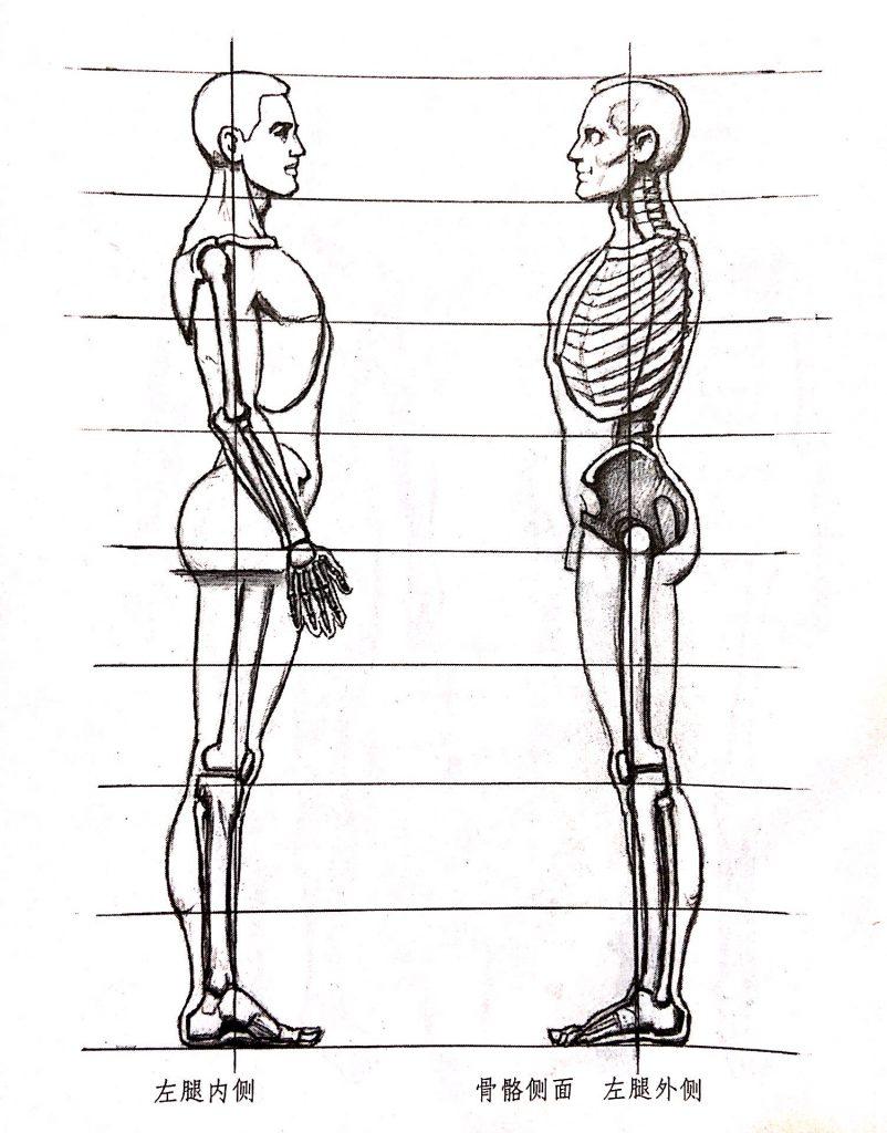 人体小知识6