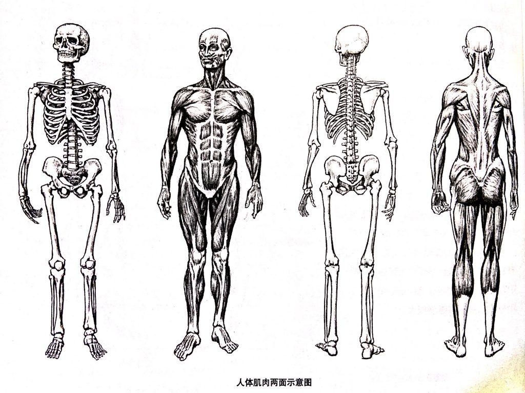 人体小知识7