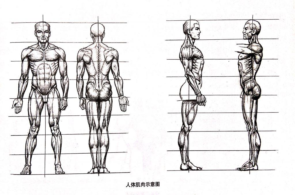 人体小知识8
